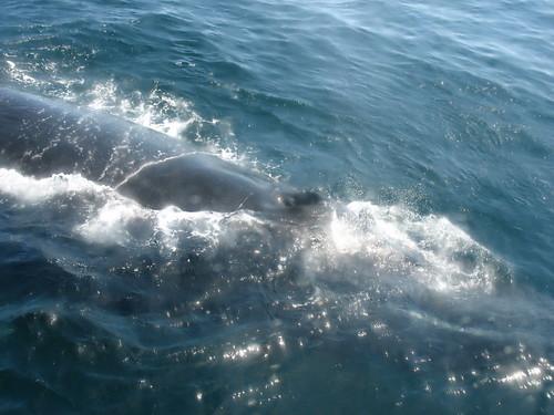 whale three