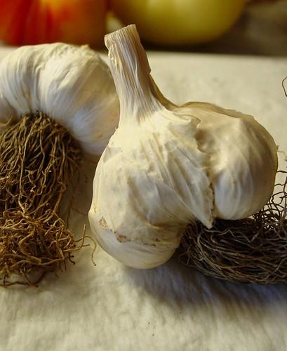 Italian Pink Hardneck Garlics (1)