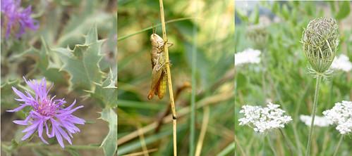 egrasshopper