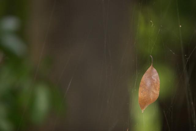 枯葉の行方