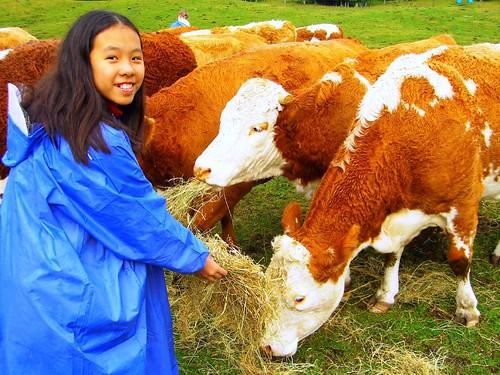 小心不可站在牛的後方