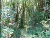 28.8 acres forest
