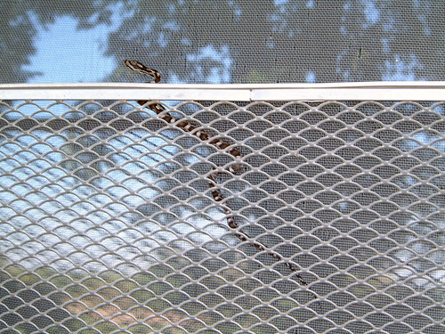 2006-09-06 - SnakesInMyDoor-0002