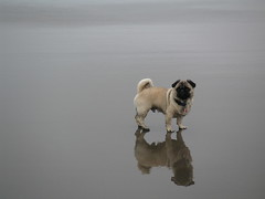 A Pug Above, a Pug Below