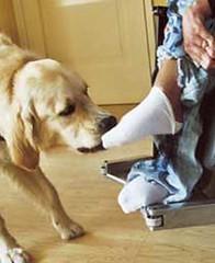 Zorgverzekeraars onderkennen noodzaak hulphond
