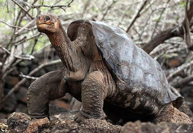 la última tortuga