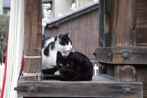 やんちゃ仔猫