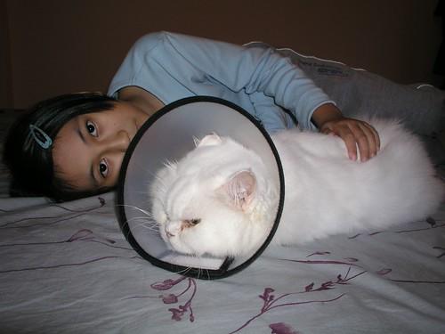 蓁妮與胖胖貓