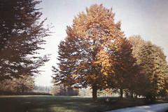 Marronniers en automne (autour de 1920)