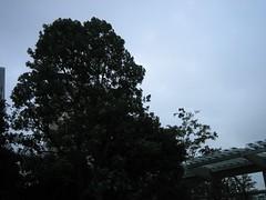 六本木ヒルズ