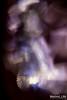17183636779_b18b6b063f_t