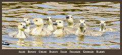 The Gosling Family photo by Summerside90