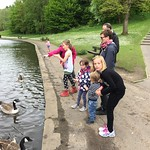 Feeding the ducks and Geese<br/>25 May 2015