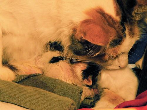 chloe and kittens.