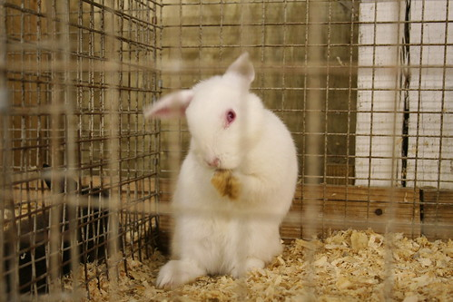 Hey Lynda!  How 'bout this bunny?