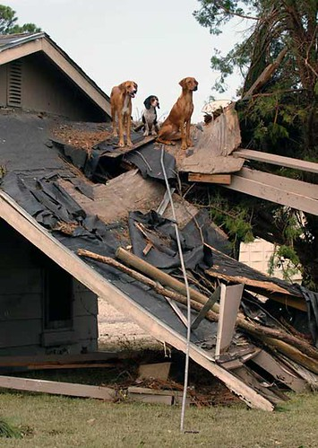Katrina's Canine Victims 0002