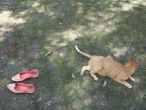 Orange shoes, orange cat