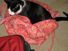 Simon in paisley bag