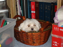 multy in a basket
