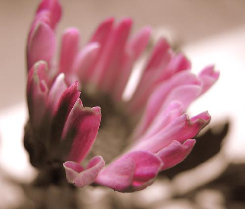 pink tinged