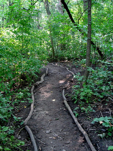 Wooded path by Lake Mendota