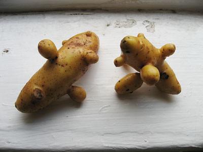 twopotato