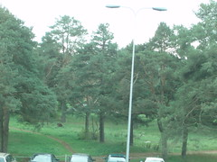 View from window to forest