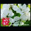 40736410265_fbd4e038cb_t