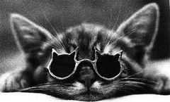 cat_sunglasses