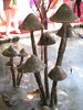 Toadstool sculpture