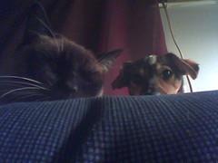 Peeking Pets