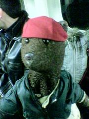 Bearsac.com