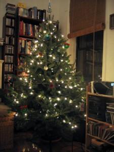solstice tree 2005