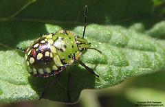 bug-topview