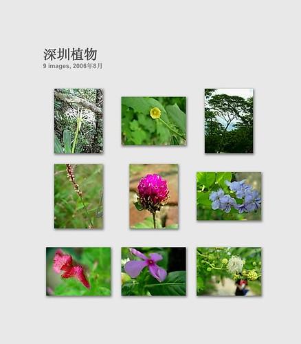 深圳植物 2