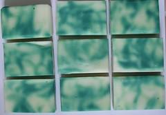 eucalyptus swirl