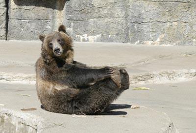 grizbear_sm