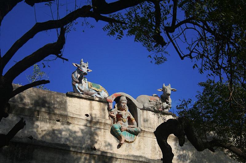 Madurai : Angel
