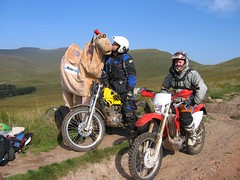 Camel gets a kiss from a motorbiker :-)