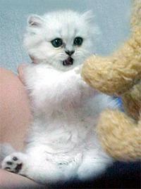 一個半月大時的咩咩把小狗娃娃當成假想敵