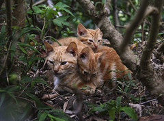 Wild Cats photo by Gianna G