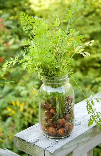 thumbelina carrots harvest in a jar