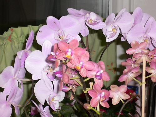 orkideer 2