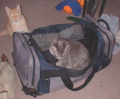 Xena in my large duffel bag - Abby in background