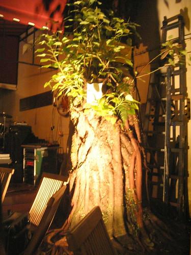 Ye olde tree