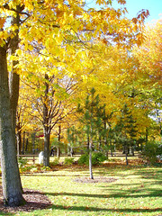 Autumn-Campus