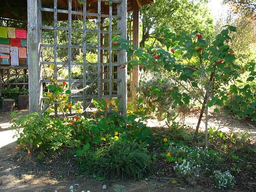 Garden for the Environment