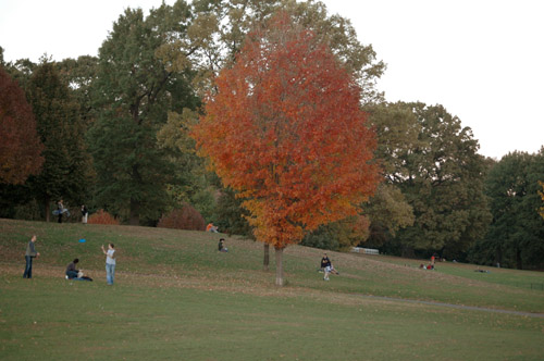 Fall Prospect Park One
