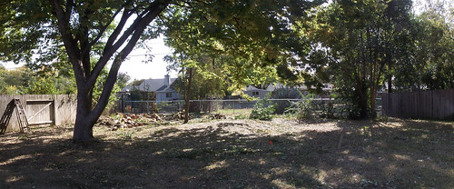 back_yard-after_trees.jpg