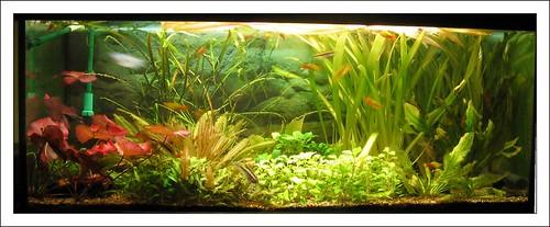 Aquarium Wohnzimmer